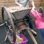Le broyage des pommes