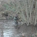 Renaturation d'une mare par le CPIE du Périgord-Limousin