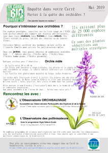 carre-mai-orchis