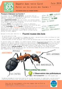 carre-juin-fourmi
