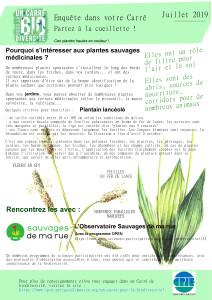 carre-juillet-plantain