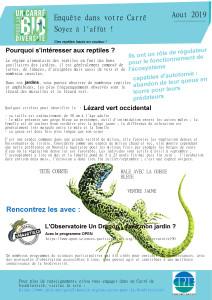 Carre_aout_lezardvert