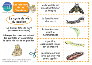 papillon-jeu-cycle