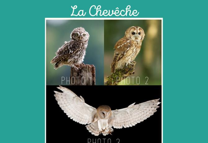 24h-biodiv-rapaces-nocturnes