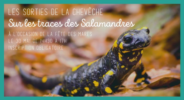 Sur les traces des salamandres - illu