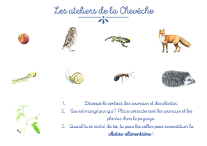 reponse-au-jeu-chaine-alimentaire