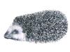 Traces et indices de mammifères