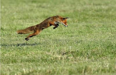 renard-david-dagneaux